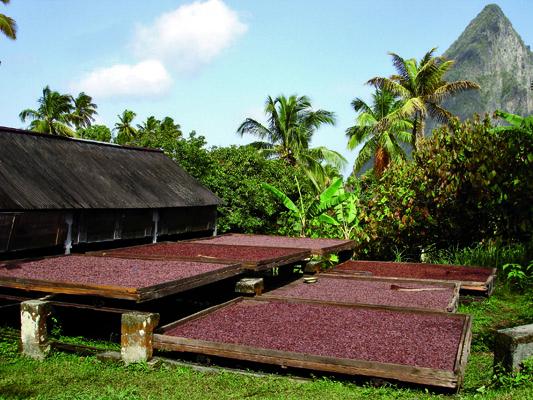 Hotel Chocolat Cocoa Farm