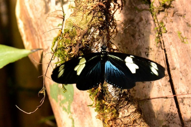 butterfly22