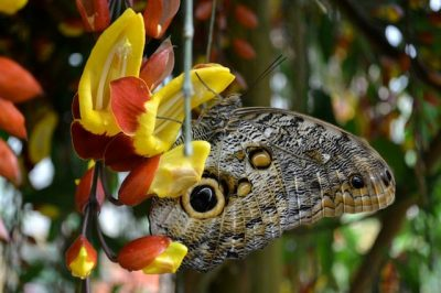 Day Trip From Quito: Colorful Butterflies In Eco-Friendly Mindo