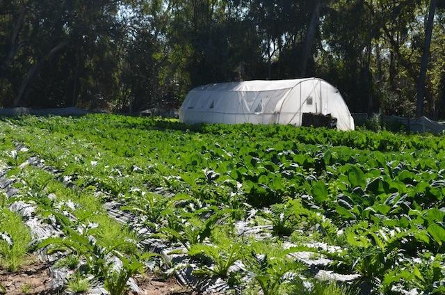 west organic farm