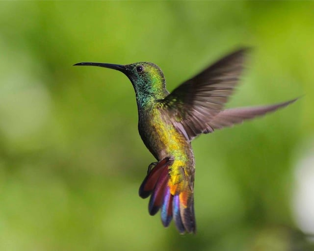 Trinidad The Land Of The Hummingbirds Epicure Culture Epicure