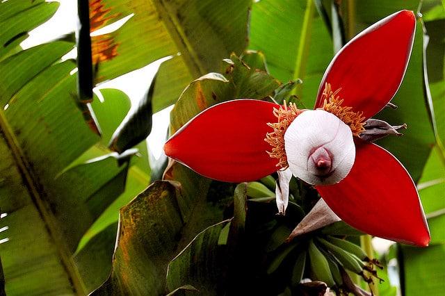 a short essay about amazon rainforest