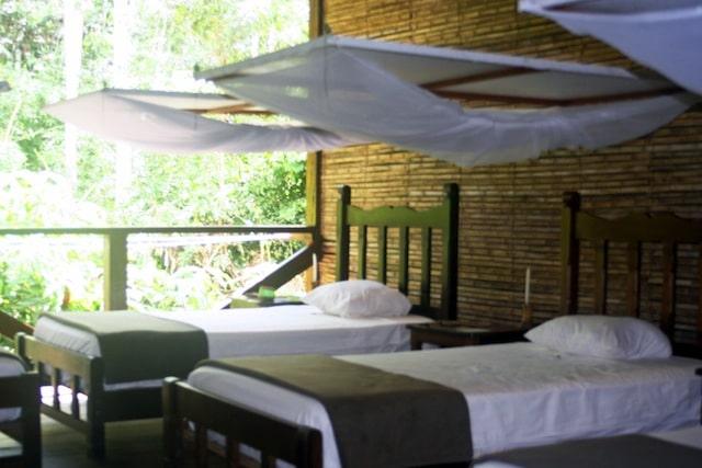 rainforest lodge