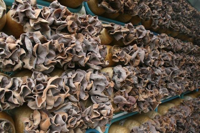 Pepeiao Mushrooms
