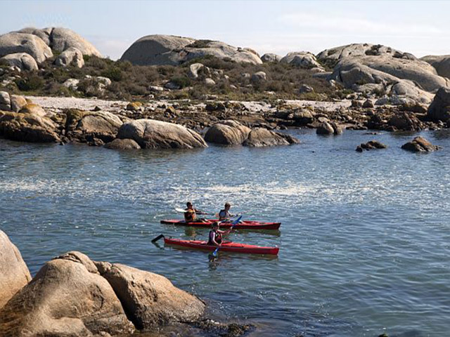Kayak to see sea penguins in South Africa.  Photo courtesy of African Adventures.