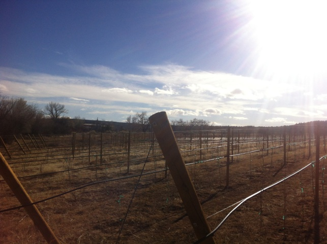 Animas Valley Vineyard