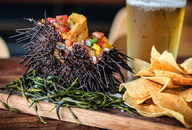 Sea Urchin and Beer at Spike's Africa Bar and Restaurant, San Diego