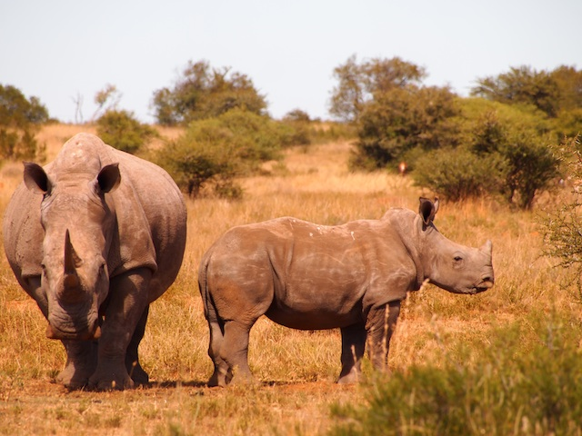 Awareness Check: Is Rhino Poaching Funding Terrorism?