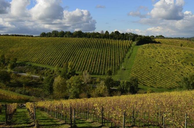 chianti classico vineyards