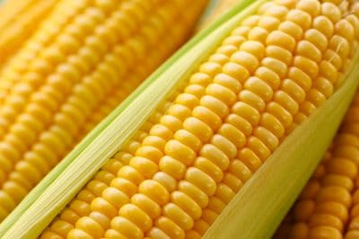 Disturbing Facts About The American Corn Industry [Infographic]