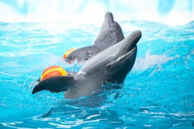 Dolphin Death At Mirage Hotel Raises Questions Of Cetacean Rights