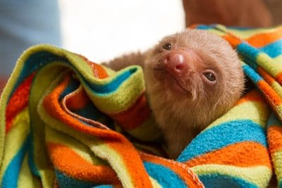 How The Sloth Sanctuary Is Educating To Costa Rica