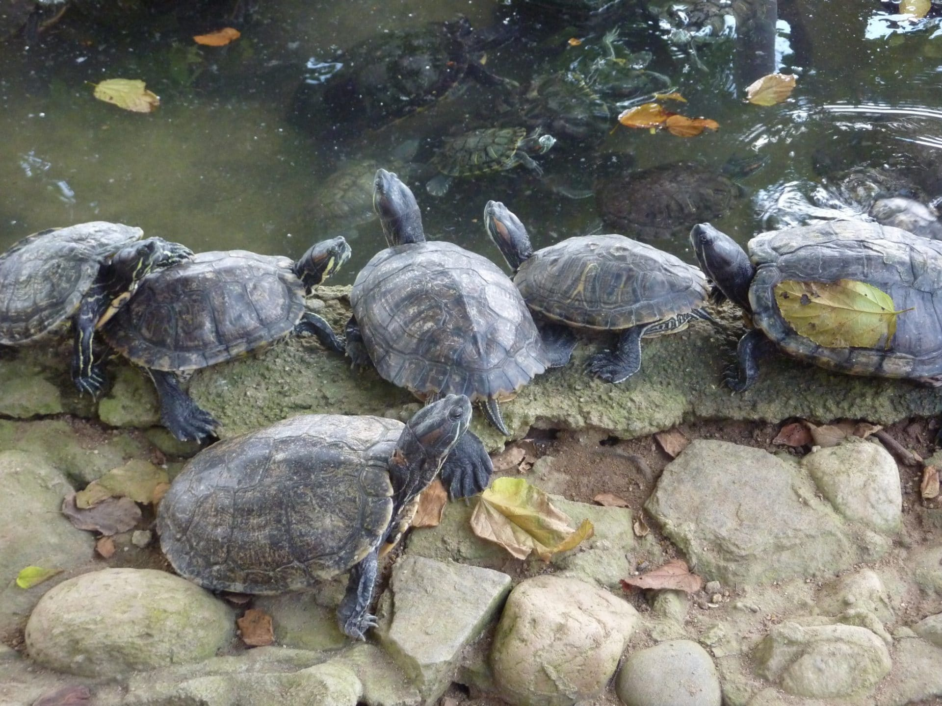 Sea Turtle Conservation Thrives In Oaxaca Thanks To Tourism : Epicure ...