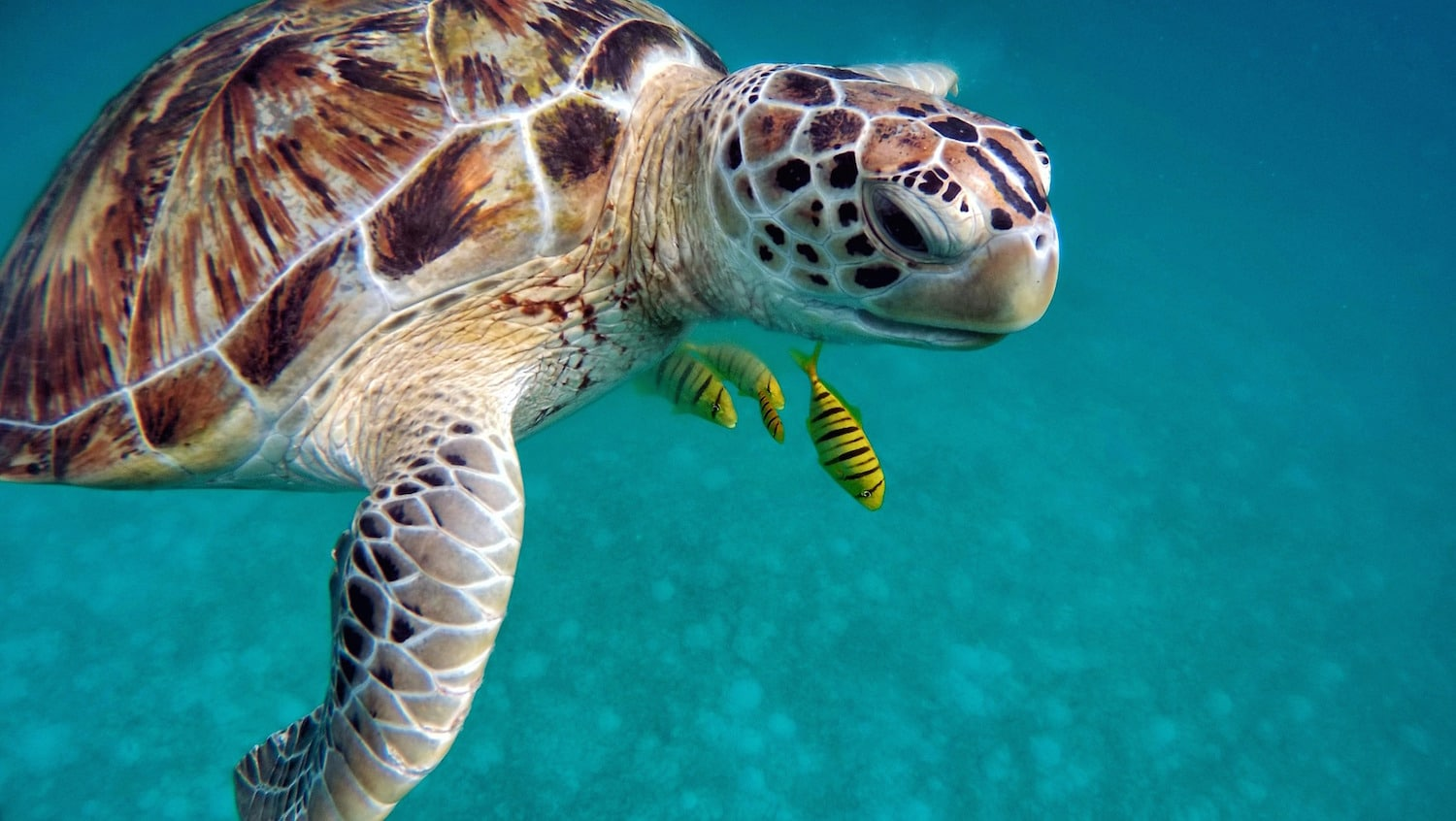 Sea Turtle Conservation Thrives In Oaxaca Thanks To