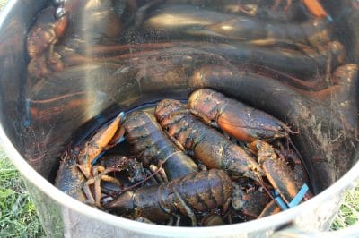 Why Cape Breton Island Has the Most Delicious Lobster In The World