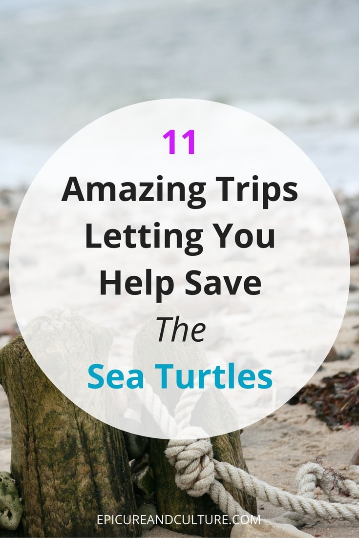 Wildlife and Turtle Watching Trips